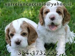 vuoi un cucciolo chiamate questo numero