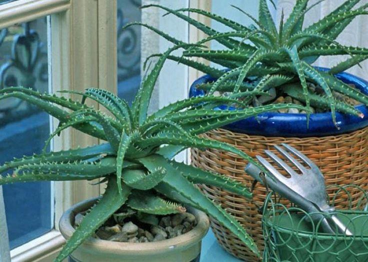 """Résultat de recherche d'images pour """"plantes dépolluantes d'intérieur pinterest"""""""