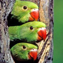 tropische vogels - Google zoeken