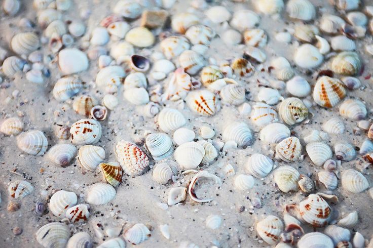 Yksi suosituimpia lomatuliaisia on kauniit  simpukankuoret ja näkinkengät.    http://www.finnmatkat.fi/ hashtag#Finnmatkat