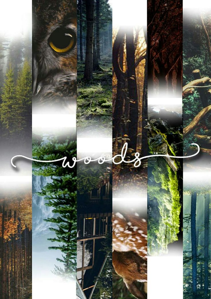 Moodboard project. Woods