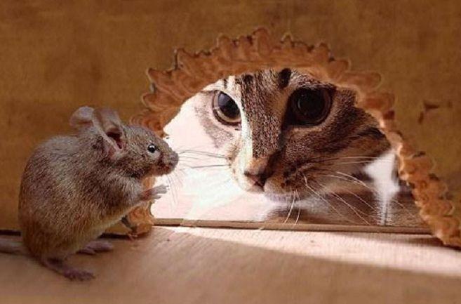 21 Petua Halau Tikus Dari Rumah | Tikus adalah sejenis haiwan perosak yang membawa kekotoran dan kerap membuat onar lebih-lebih lagi di kawasan dapur. Malah, ia juga menyebarkan pelbagai jenis penyakit berjangkit. Tanpa perlu membuang masa, apa kata kita terjah 21 Petua Halau Tikus Dari Rumah yang dikongsikan oleh Media Sensasi di bawah ini khas buat pembacaan para pengunjung setia blog ini. Petua Halau Tikus Dari Rumah Pokok durian belanda Letakkan beberapa helai daun durian belanda di…