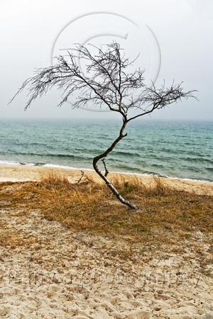 Windswept  framcaphotography.com