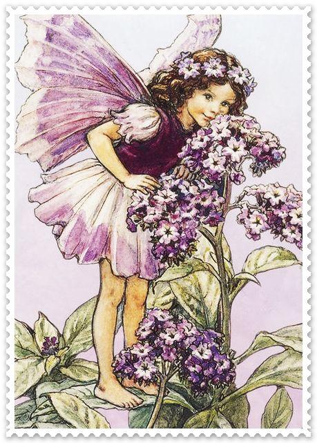 Palikú: Hadas de las flores. Cicely Mary Barker.                                                                                                                                                      Más