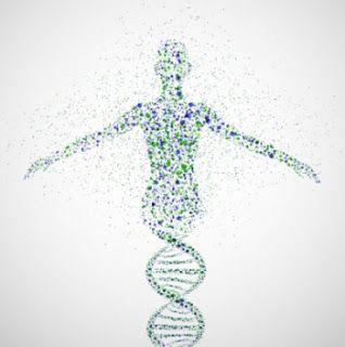 """Vacina de DNA contra dengue revela imunidade dupla  """"A pesquisa aponta ainda que o tipo celular mais importante neste processo não são os linfócitos T CD8+ – que atacariam diretamente as células infectadas – mas sim os linfócitos T CD4+ – que podem atuar diretamente na destruição de células infectadas ou orquestrando diferentes mecanismos de defesa..."""""""