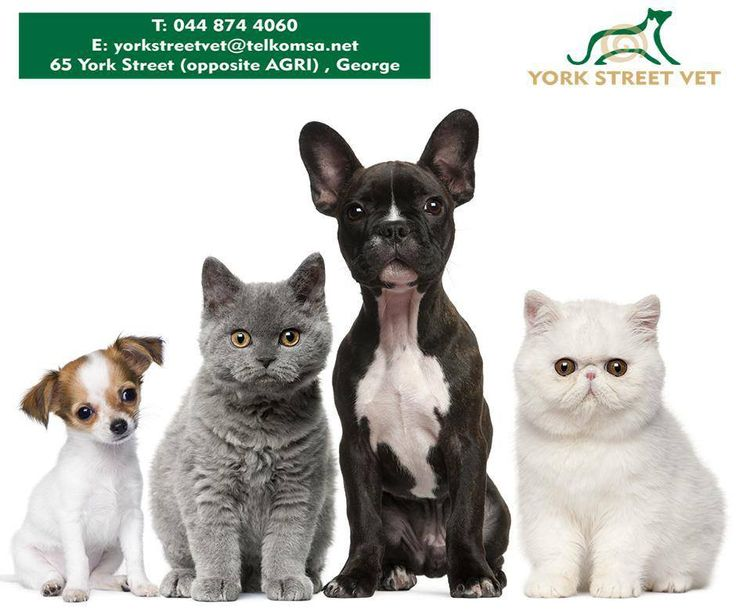 #Seresto is an innovative flea and tick collar which protects #cats and #dogs from fleas and ticks for up to 8 months - without the need to remember monthly applications. Available from #YorkStreetVet or call us on 044 874 4060 for more information.https://www.facebook.com/Yorkstreetvetshop/photos/pb.646016452164207.-2207520000.1439134251./812308765534974/?type=3