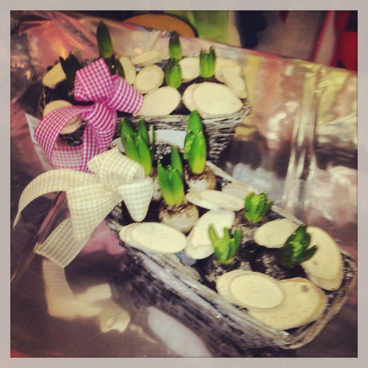 Giacinti #flowers