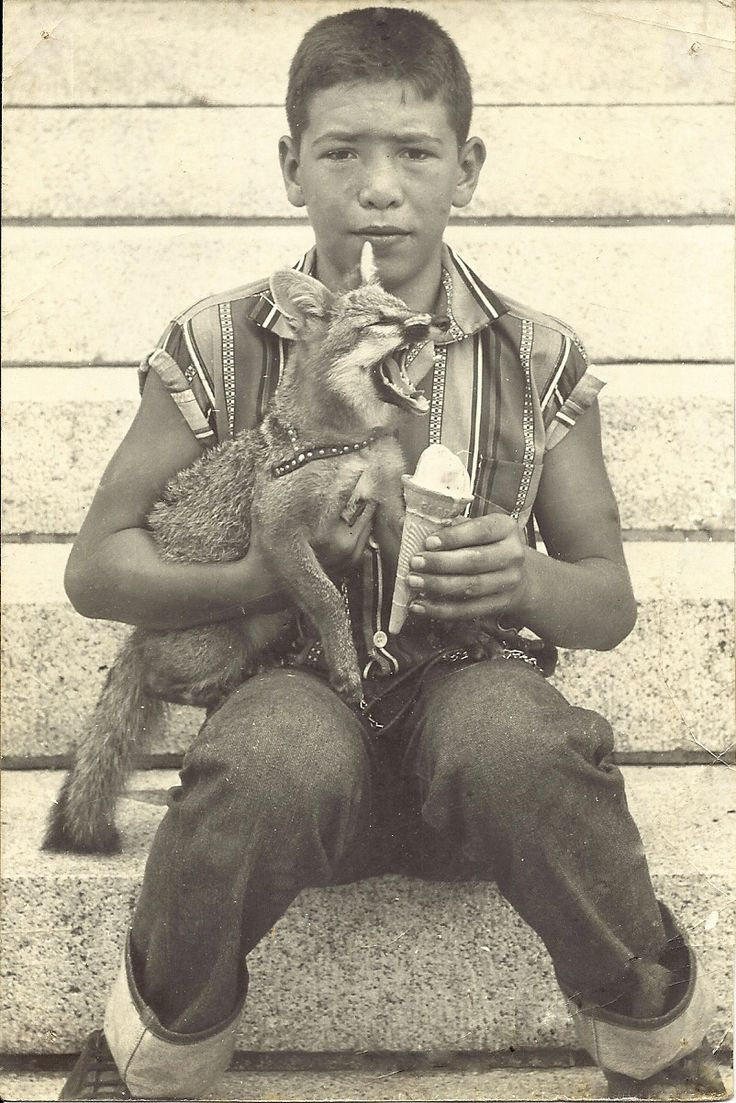 little boy in a sweet shirt feeding his pet fox an ice cream cone circa 1967.  ain't nothin' wrong with that.