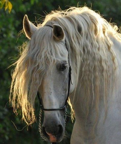 Les 25 meilleures id es de la cat gorie pure race - Tchoupi et le cheval ...