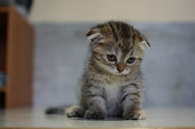 If you're not too bummed out by the Sad Kitten almost-meme at this point, go ahead and make your own using this image and the editor below.