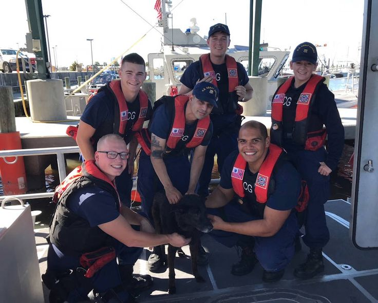 A U.S. Coast Guard boatcrew from Station New Orleans rescued a dog in Lake Pontchartrain. A Coast Guard boatcrew that was preparing to get underway for training launched, rescued the dog and brought him back to the station. From there, he was turned over to the Jefferson Parish East Bank Animal Shelter.