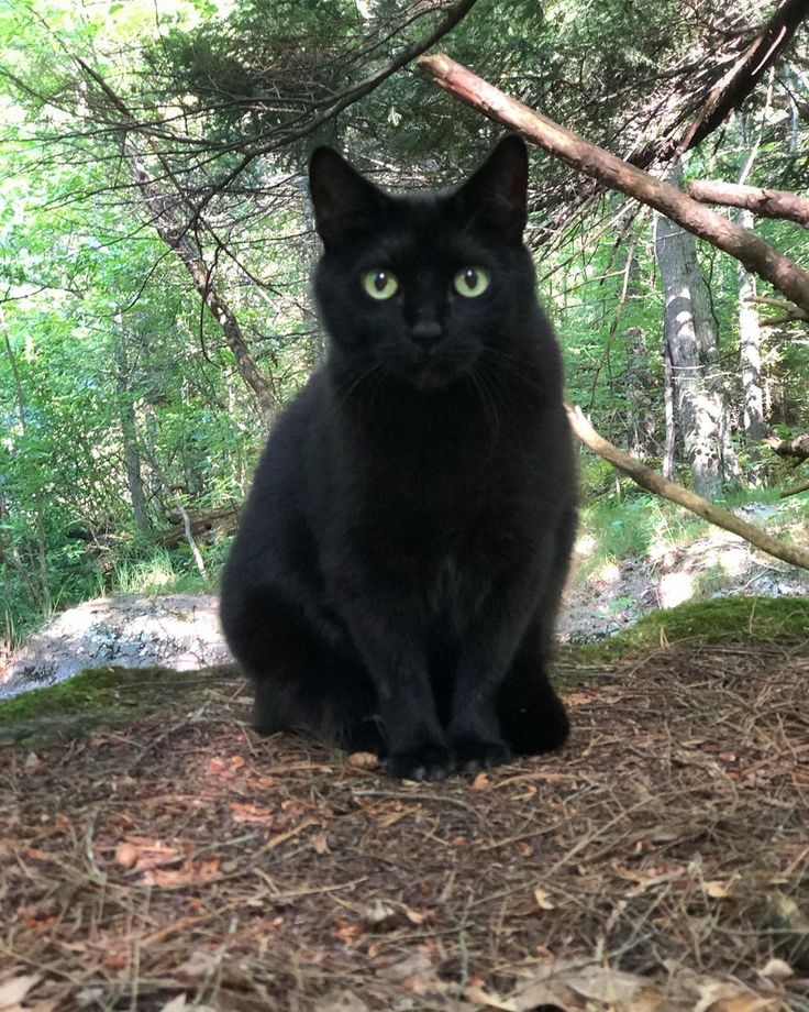 Black =^^= Catz ♥ image by TwoGoneCoastal Black cat art