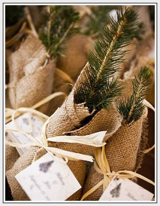 These fir or pine saplings are a great idea for the eco-conscious- TIP: provide these along side another option for those guests who know they will never plant them.