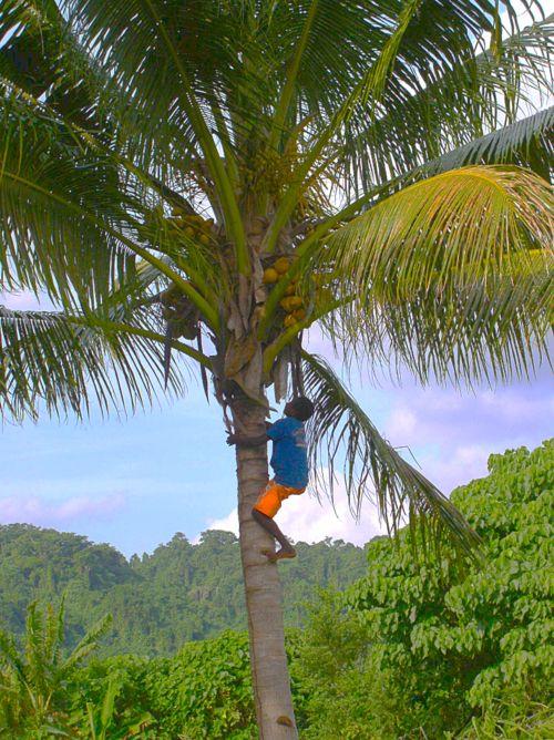 Far Flung Places -  Local Vanuatu boy on Epi providing coconuts for a snack