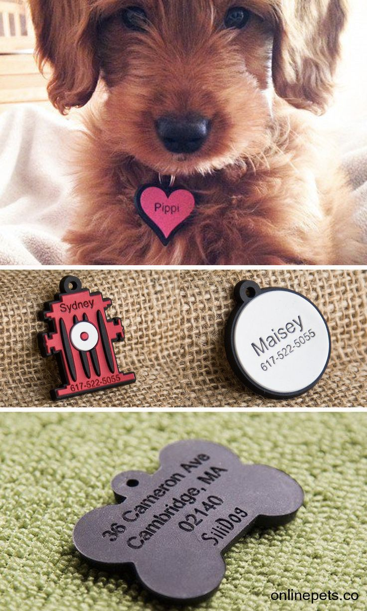 best bingo images on pinterest dog stuff pets and cute dogs