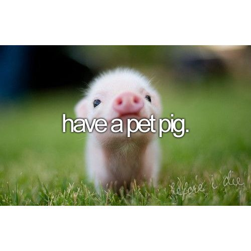 perfect bucket list | Tumblr YES I MUST HAVE A PIG. AND WHEN/IF I GET ONE I WILL NAME IT WILBUR OR ARNOLD. :D