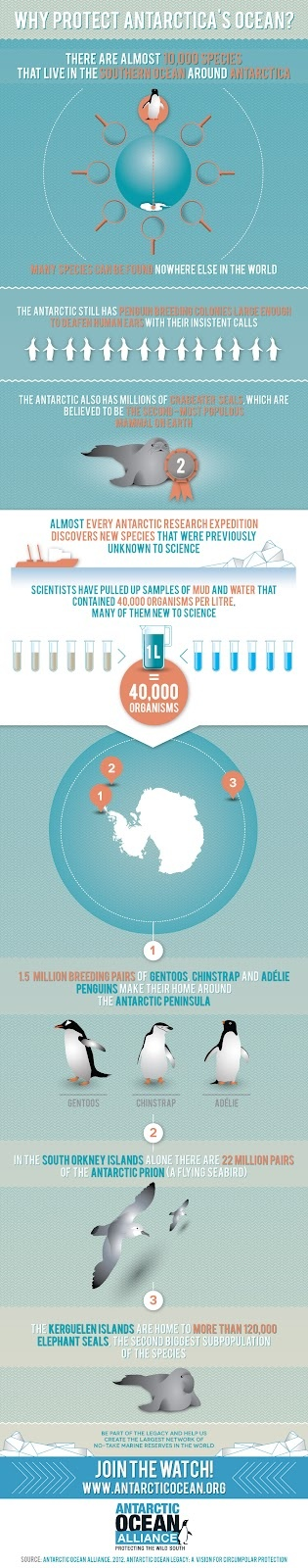 The Living Ocean: Why Protect Antarctica 's Ocean? (Infographic)