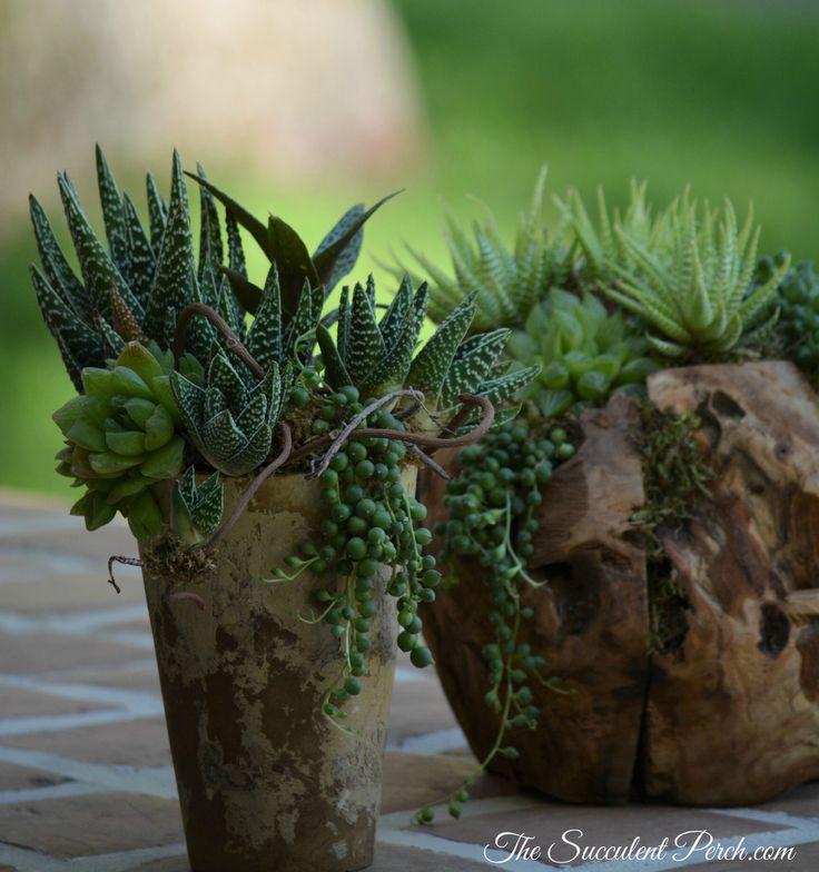 529 best images about succulent container arrangements on for Indoor succulent wall