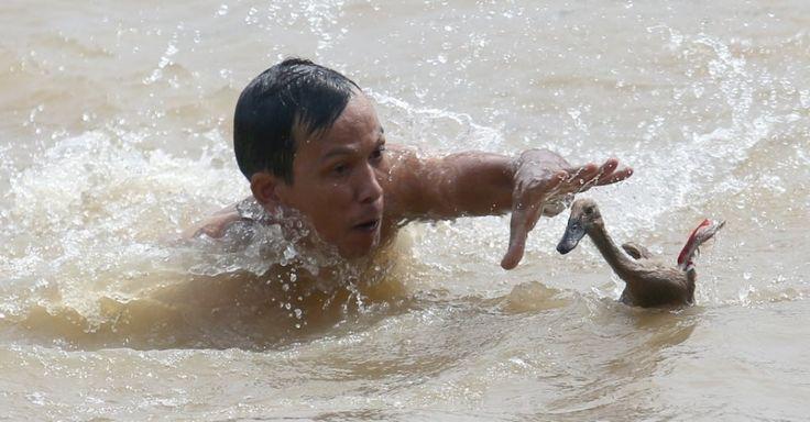 20160609 - Homem tenta pegar um pato durante uma competição realizada durante o Festival do Barco do Dragão, em Tangerang, Indonésia. O evento é celebrado no 5º dia do 5º mês lunar do calendário chinês. Imagem: Tatan Syuflana/AP