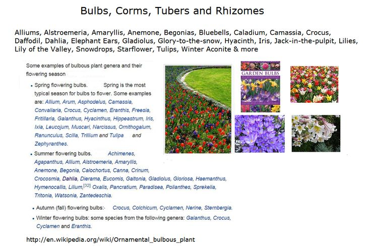 Types Of Bulb Corms Tubers And Rhizomes There Are Many