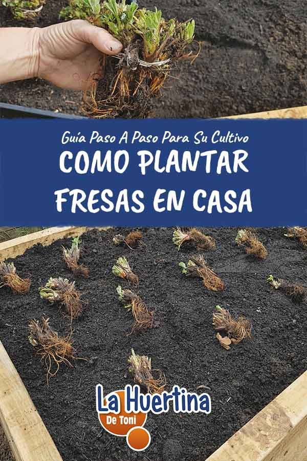 Compost, Plantar, Garden Tips, Gardens, Home, Growing Plants, Harvest, Drip Irrigation, Composters