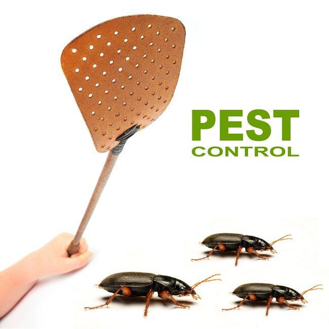 Effective Ways of Bed Bugs Treatment  #BedBugTreatmentMelbourne  #BedBugTreatment
