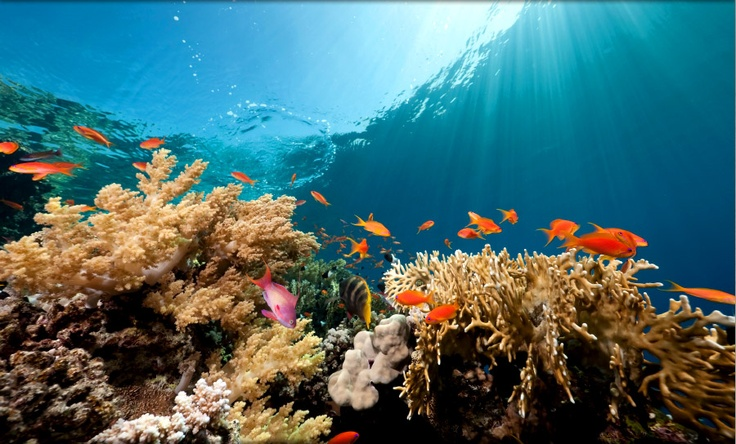 Scuba diving Kauai will be my first in the Pacific, I can't wait.