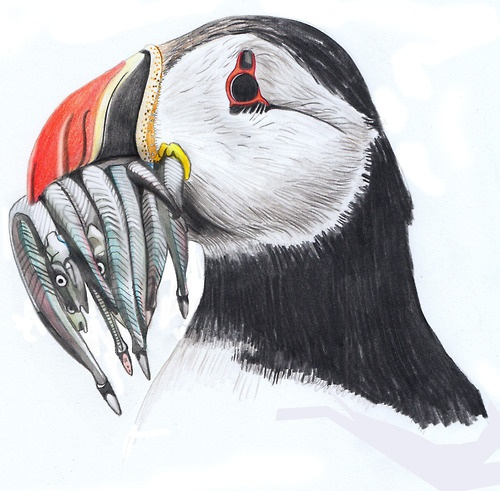 Charlotte Linton - Puffin