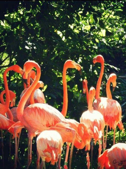 Flamingos, Ménagerie du Jardin des Plantes, Paris, 2012