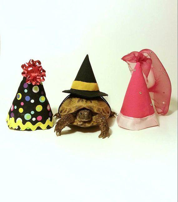 Tortoise Costume Pet Costume Princess Witch by DeerwoodCreekGifts, $20.00