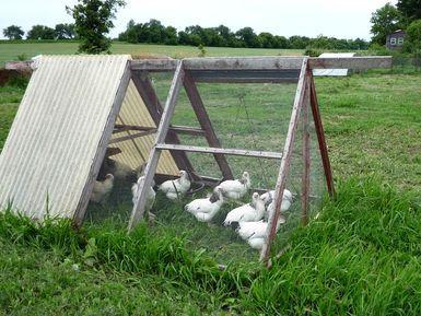 ChickenTractor_JessicaQuoteTheHunQuoteReeder_Flickr.jpg - Jessica