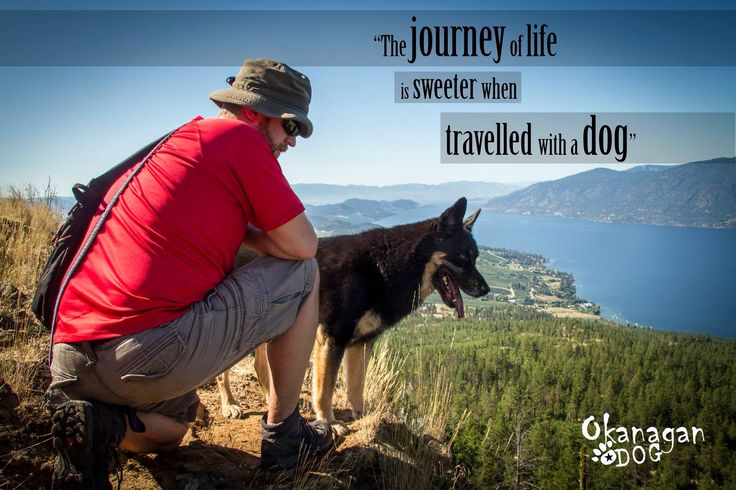 The journey of life is sweeter when travelled with a dog!