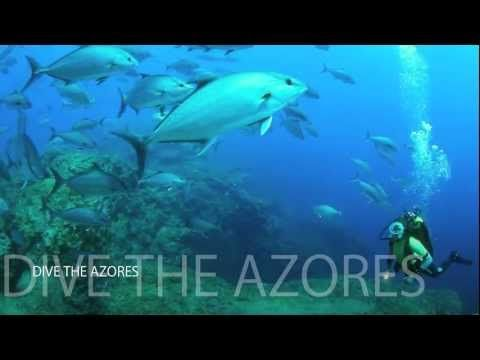VIDEO: Dive in the Azores. #beautiful