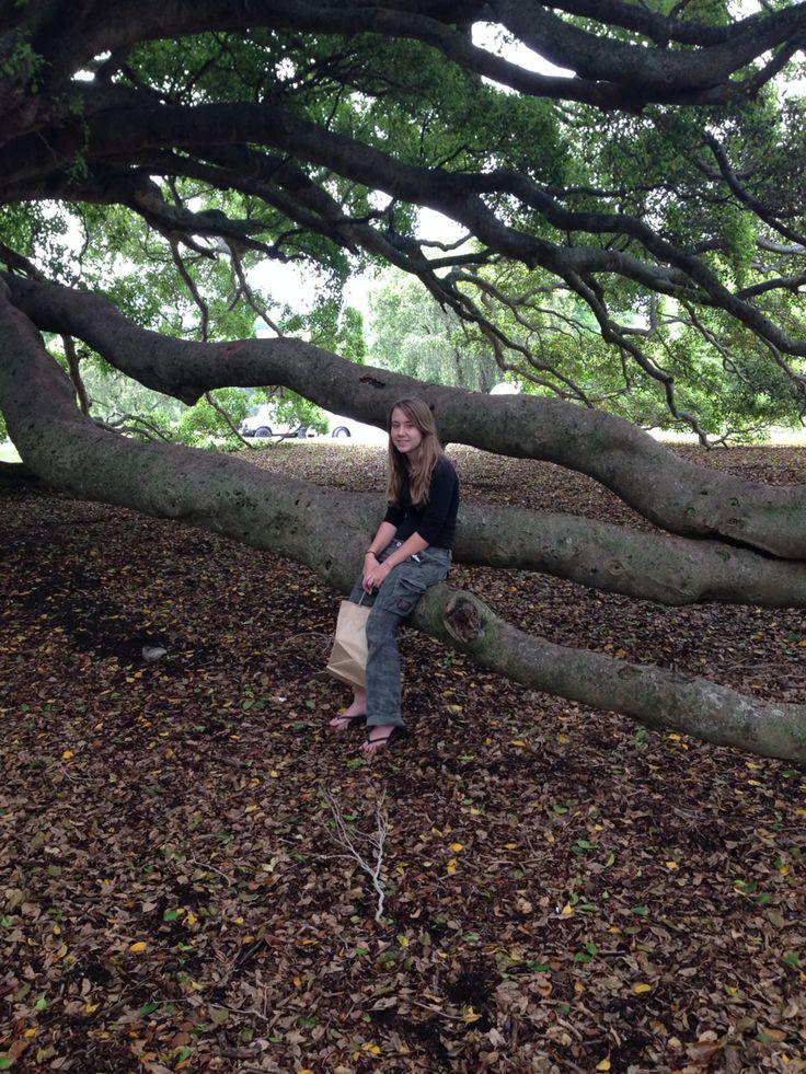 That tree at Milton