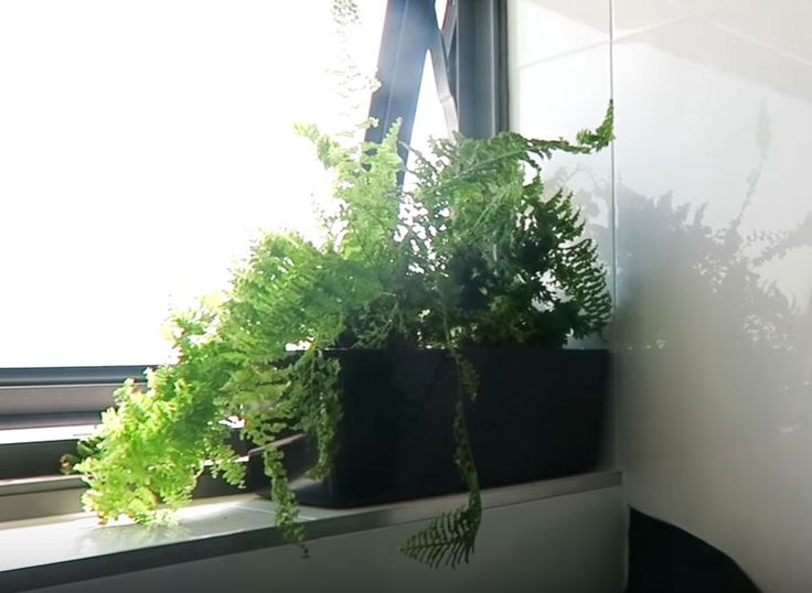 Indoor plants for oxygen  #freeplants #indoorplants indoor plants for oxygen Check more at http://flowersimg.com/indoor-plants-for-oxygen/