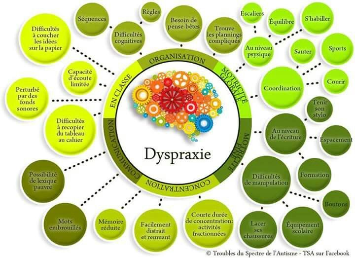 Dyspraxie                                                                                                                                                                                 Plus