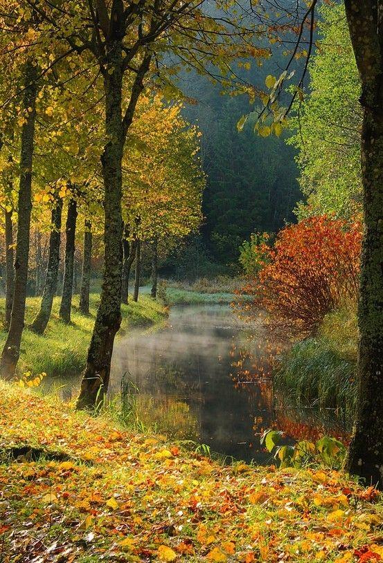 Inspiration Lane: Autumn Pictures, Autumn Leaves, Fall Scene, Autumn Scenery, The View, Beautiful, Favorite Seasons, Fall Autumn, Autumn Splendor