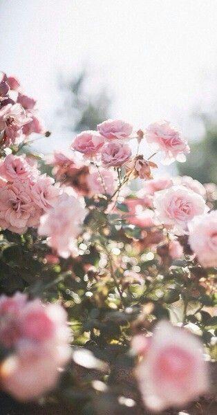 Flowers.gardeen