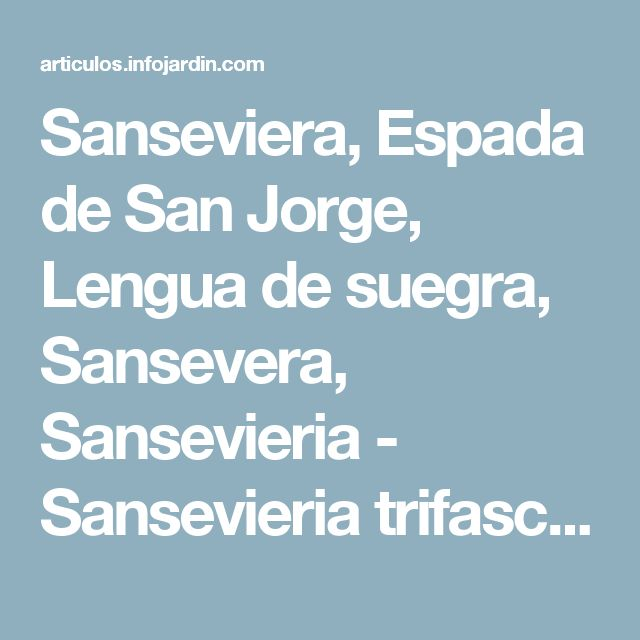 Sanseviera, Espada de San Jorge, Lengua de suegra, Sansevera, Sansevieria - Sansevieria trifasciata 'Laurentii'