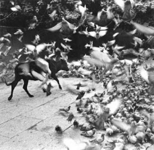 Pájaros como símbolo recurrente en las imágenes de graciela.