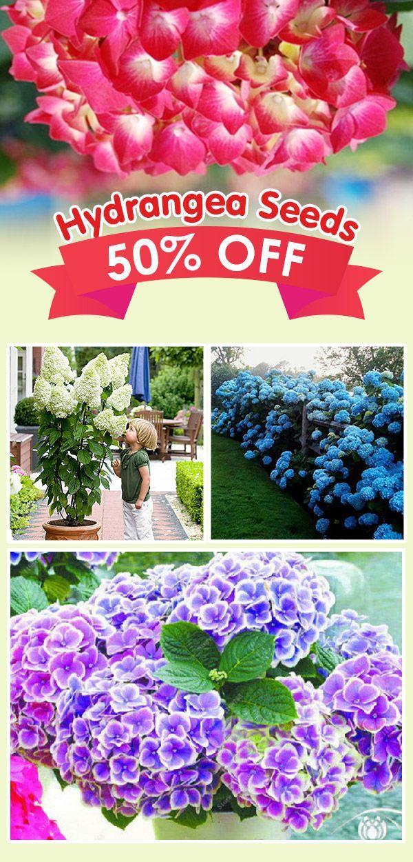 Bonsai 50 Pcs Multiple Color Choice Hydrangea Seeds Perennial Flower Plant Hydrangea Balcony Plant Planting Hydrangeas Flowers Perennials Hydrangea Seeds