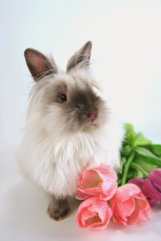 How to take care of your pet rabbit