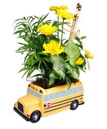 """""""SCHOOL BUS PLANTER""""  Send a fun gift for back to school or any tiime to you favorite teacher or kid! This cute ceramic yellow school bus is hand-painted in detail and filled with a variety of green plants. Fresh cut Daisies add a bright accent. Pencils and a raffia bow make the perfect finishing touch."""