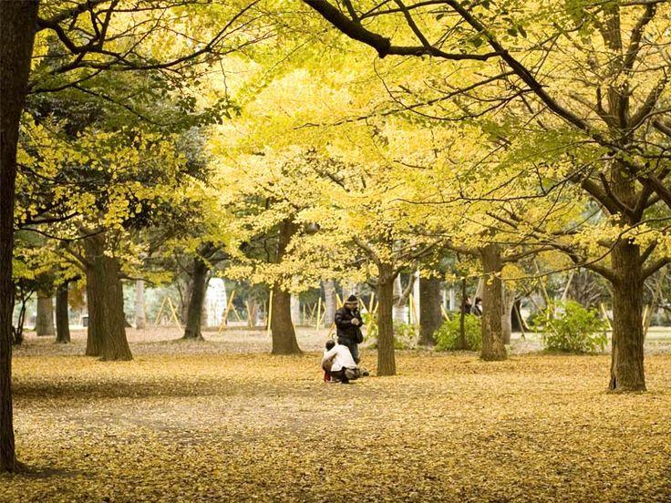 Bebê recém-nascido deixado em banco de parque de Tóquio. A polícia de Tóquio, Distrito de Meguro, está procurando a pessoa ou pessoas que deixaram um...