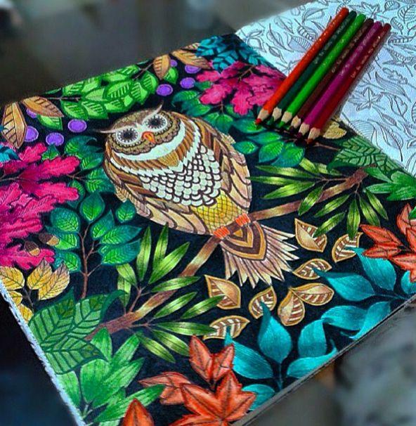 jardim secreto livro coruja - Pesquisa Google