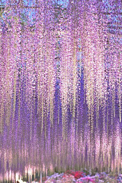 Wisteria, lavender rain...#Purple #Ombre #Wedding Wow, Wow, Wow!!!! Love it. And this wisteria and lavender is something that can be done with silk flowers. Adding the lights behind it is a huge wow WALL. Maybe the 'stage'. Should we use the stage for the Wedding Party? Use the Fireplace Room for a Photo Shoot.