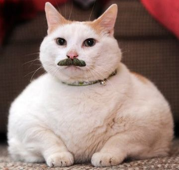 Classy Pictures Of Cats With Mustaches