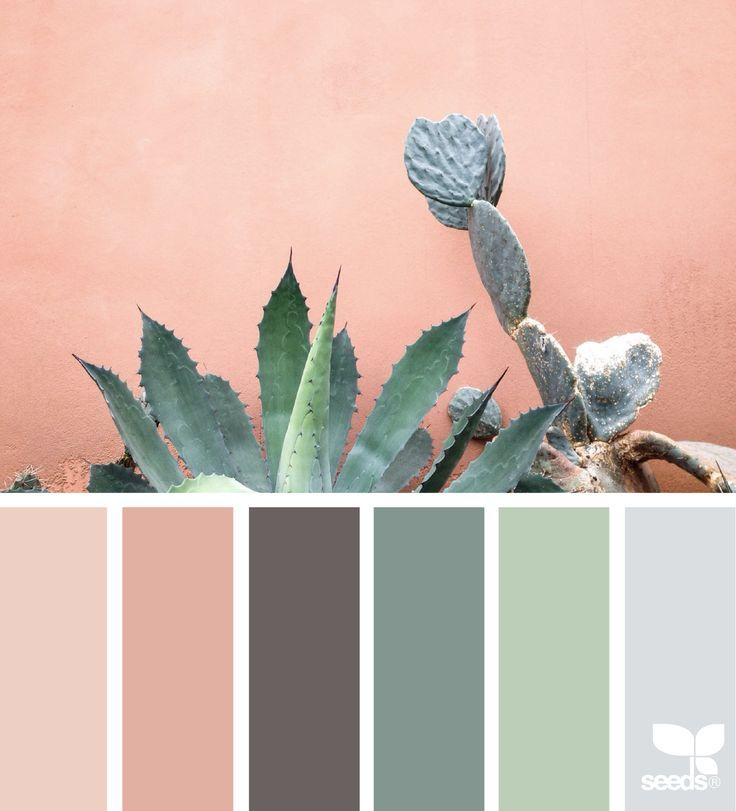 cacti color | for all who ♥ color