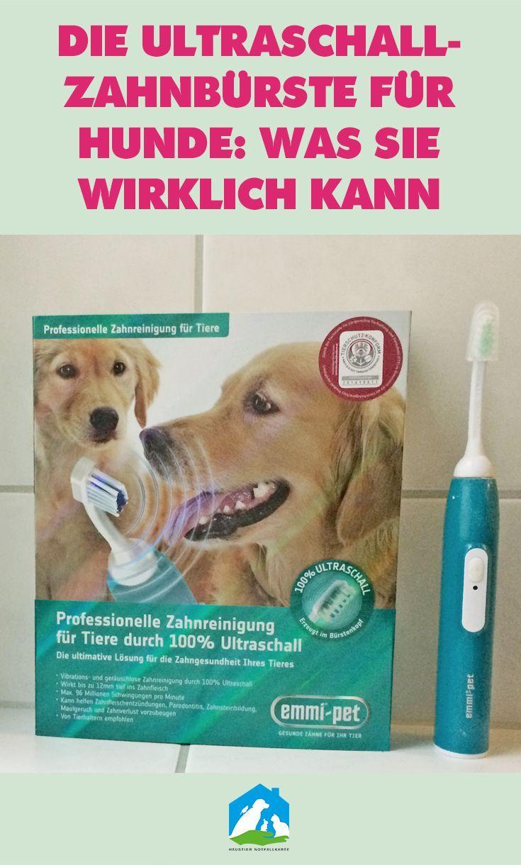 Im Test Ultraschallzahnburste Fur Hunde Von Emmipet In 2020 Hunde Erste Hilfe Hund Ultraschallzahnburste