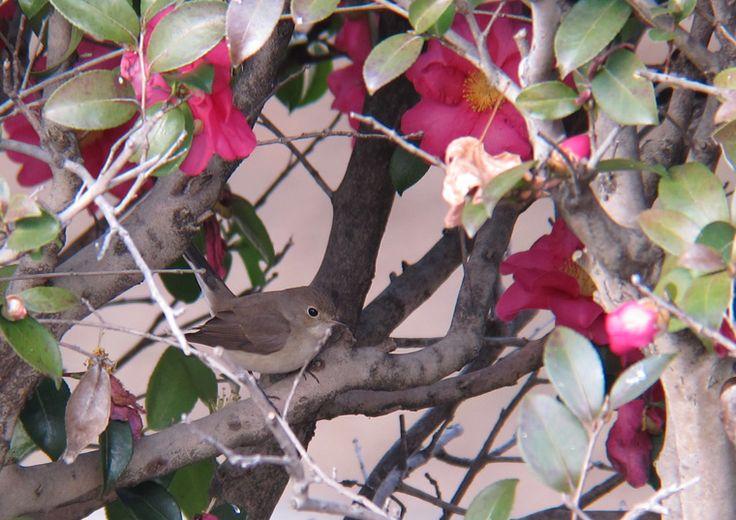 今年の初鳥・オジロビタキ - デジ亀日記